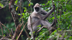 Opicos - Monkey