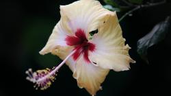 Květ - Blossom