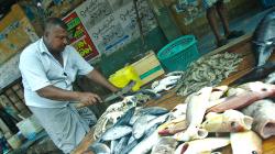 Prodavač ryb - Fish seller