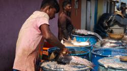 Zpracování ryb - Fish manufacturing