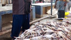 Prodej krabů - Crabs selling