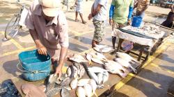 Prodej ryb - Fish selling