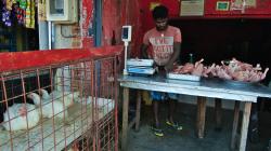 Kuřecí masna / Chicken butcher