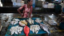 Rybí trh v Negombu / Negombo fish market
