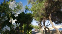 Valletta, zaostřeno na květy