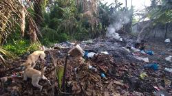 Na smetišti / On the junk heap