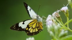 Motýl / Butterfly
